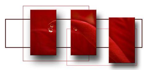 Poinsettia triptyc