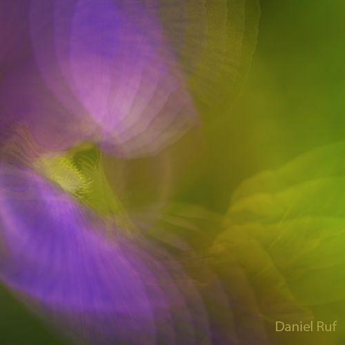 2011 06 16 Iris kaleidoscope_3758
