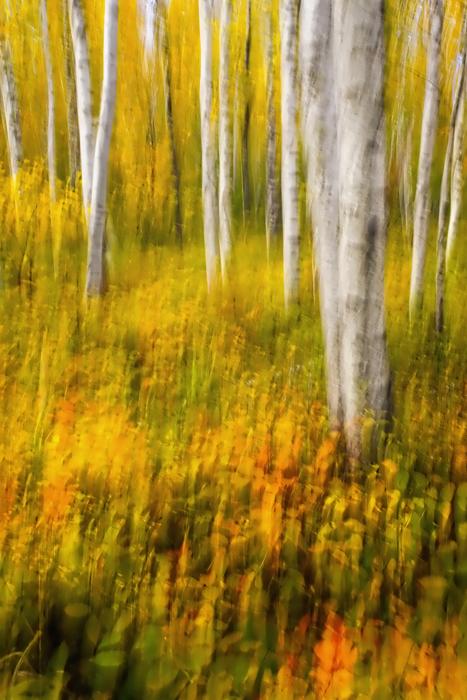20110929 Sugarloaf Birches Mn_9845