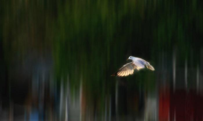 20120816 Gull_1901
