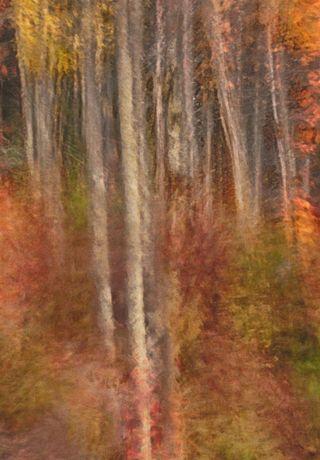 20121001 Birch Grove Mi_4989_HDR