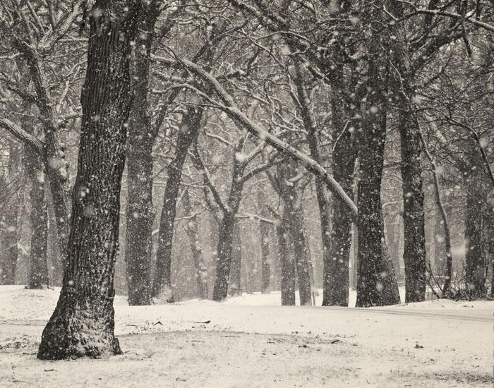 20130214 Forest Snow crop_7170