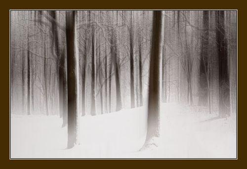 20130411 Forest Snow blur blend_8498