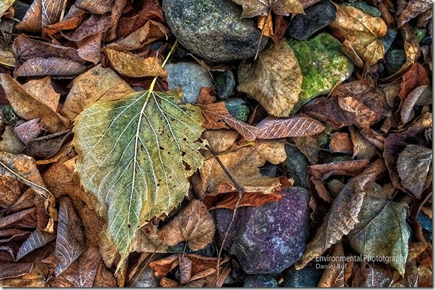 20131110-iphone-Stream-Bed-Leaves-watrmrk_0093