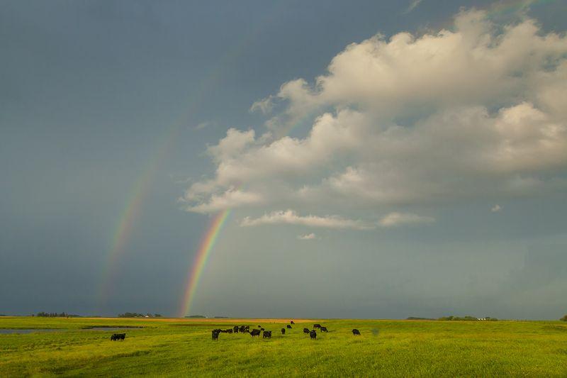20140626 What Rainbow