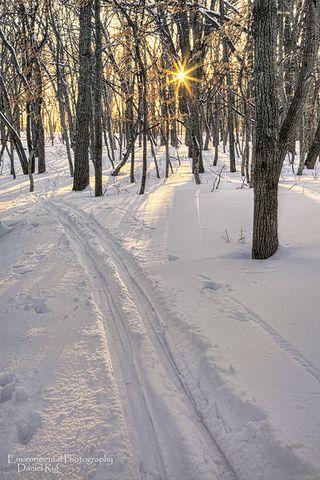 20140214-Snowy-Woods-NIK-watrmrk_2131_2_3_tonemapped