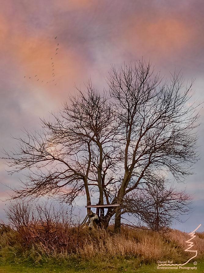 20181108-Imagination-Tree-iPhone-Edit-LM-Txt-BU_7086