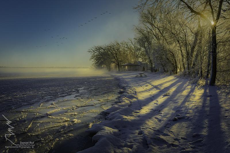 20191211 Gull Point Morning Fog Geese_U3A2910