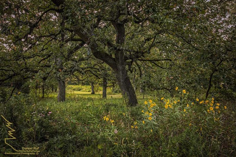 20200828-Natures-Garden-NIK_U3A8251-denoise-denoise