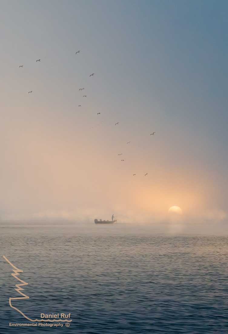 20190920-Through-The-Fog-Gulls-Comp-1