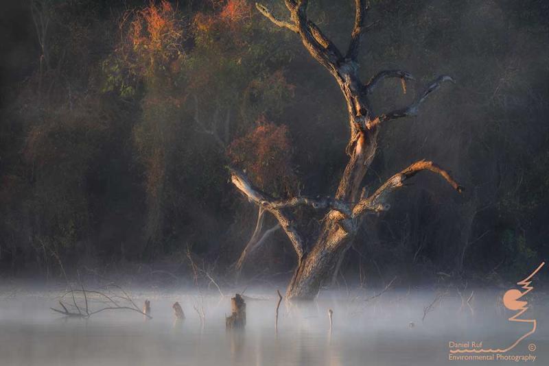 2009-11-23_3231-Natures-Curves-fog-edit