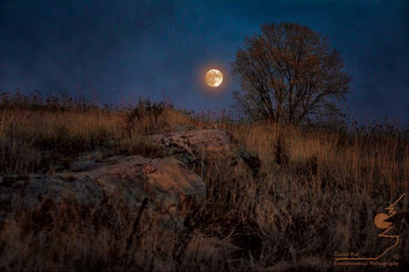 20201030-Moonrise-NIK-Txt-Comp_U3A3329